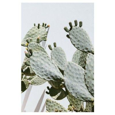Affiche Cactus Opuntia David & David Studio