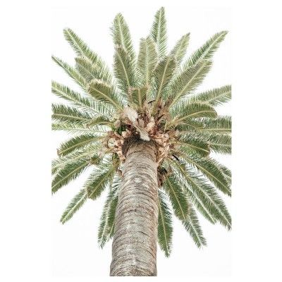 Affiche Vintage Palm Tree