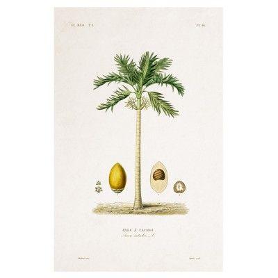 Affiche Ficus Elastica David & David Studio