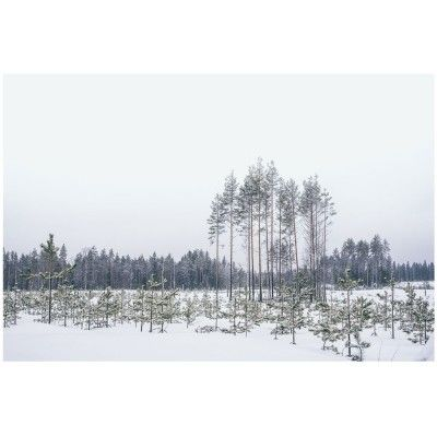 Affiche Paysages de Finlande N.1 David & David Studio