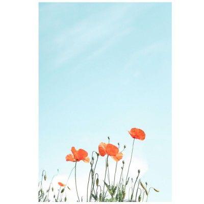 Poppies poster David & David Studio