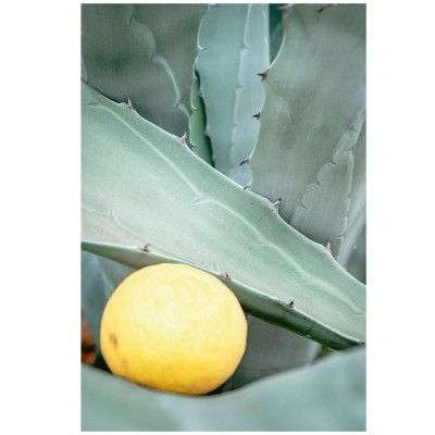 Lemon & Aloe poster David & David Studio